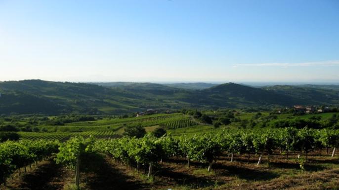 cantina vinicola zona