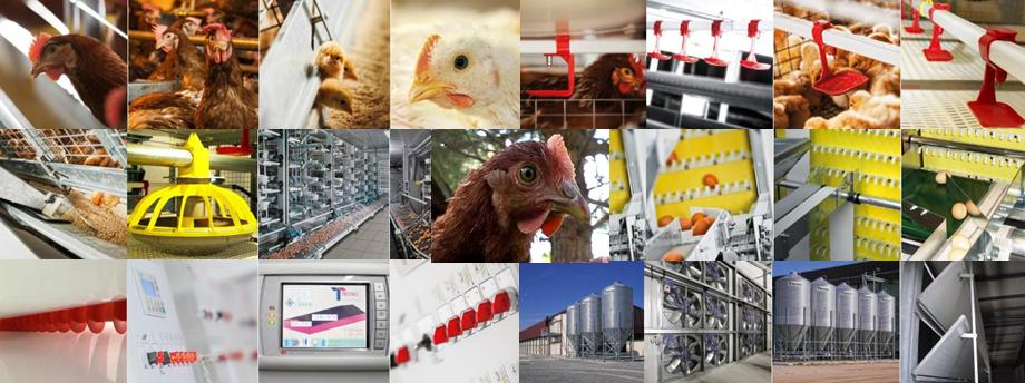 agribusiness filiera polli progetti avicoli