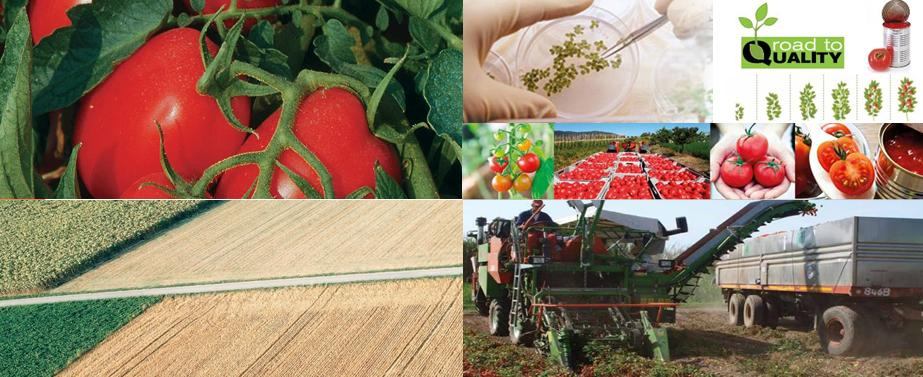 agribusiness filiera pomodoro
