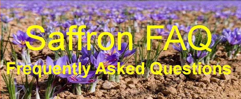 Crocus Sativus Saffron FAQ frequently asked questions