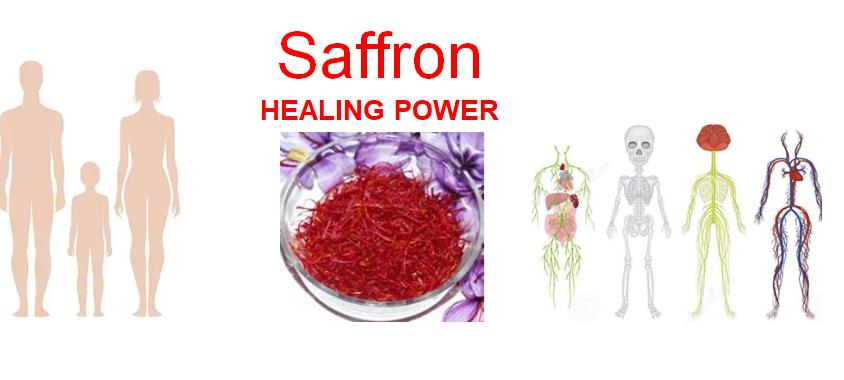 Healing power Saffron Crocus Sativus 2