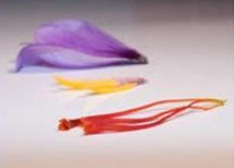 Parts of Saffron Flower Crocus Sativus