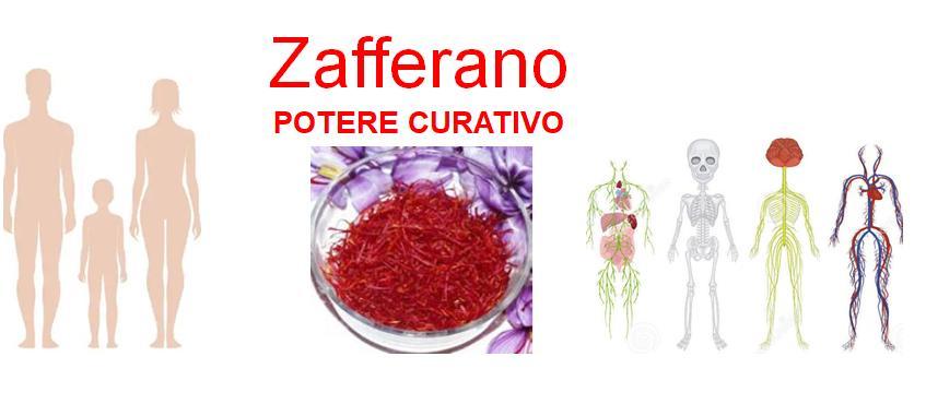 Potere curativo Zafferano Crocus Sativus 2