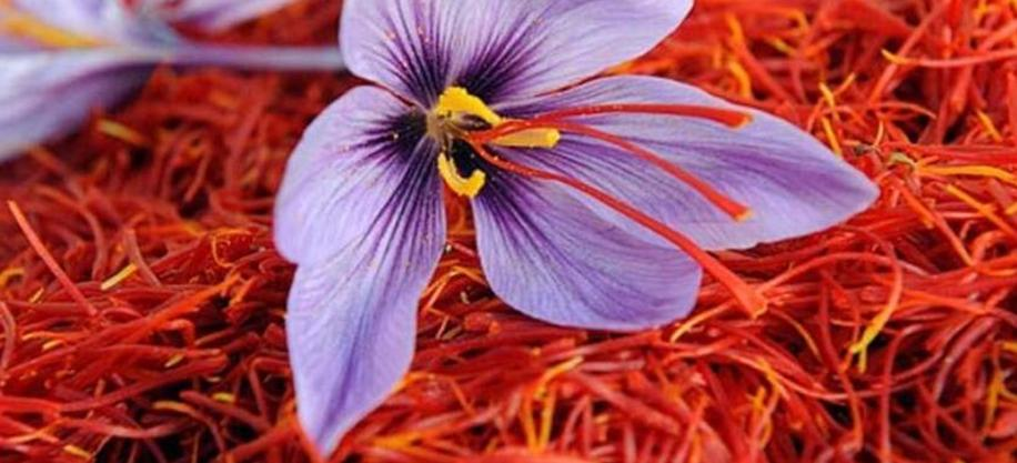 Things to know about Saffron Crocus Sativus