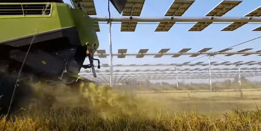 Agrovoltaico Fotovoltaico Terreni Agricoltura BIO